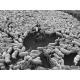 Bergère et éleveur membre d'un groupement pastoral soignant ensemble des bêtes malades