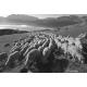 Démarrage d'un troupeau de Mérinos d'Arles au petit matin, massif du Devoluy, 2014
