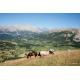 Chevaux au pâturage, Hautes-Alpes