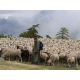 La garde du troupeau (cl. Guillaume Lebaudy)