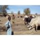 Mare d'exhaure (près d'un puits) au Sénégal