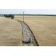 Ovins, plateau de Valensole (04), © Lionel Roux / Maison de la transhumance