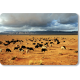 Troupeau ovin dans la steppe de l'Oriental © Mohamed Mahdi