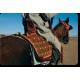 Le cheval, un signe de prestige © Mohamed Mahdi