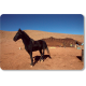 Le cheval, bonheur du nomade © Mohamed Mahdi