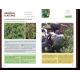 Fiche arbres et arbustes : nerprun