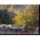 Moutons sur prunelliers, à chacun son assiette © Michel Meuret