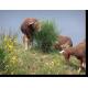 Mérinos sur spartier et brachypode rameux, Crau © Michel Meuret