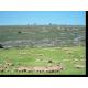 Les prairies temporaires (premier plan) sont de plus en plus utilisées au détriment des parcours (arrière-plan) © G. Gautier