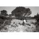 Crau des Mayorques, garrigue à romarin, aphyllante, ciste et thym © Sophie Gunther